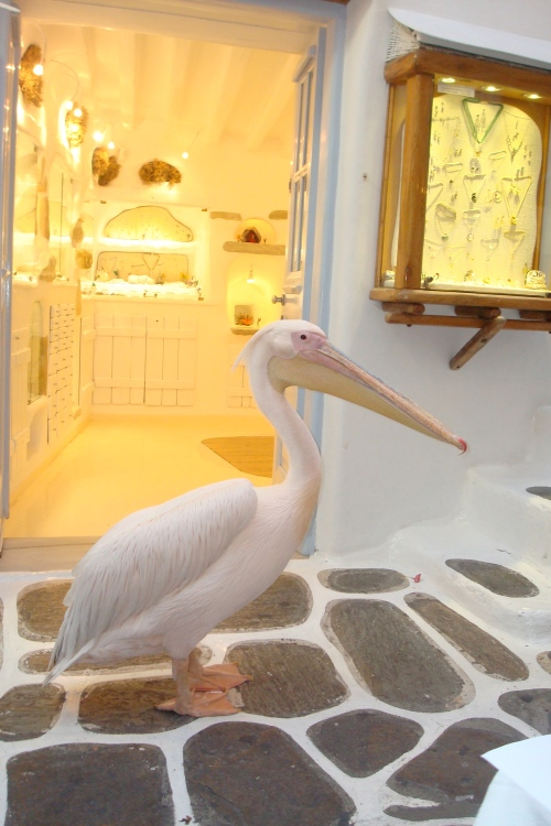 Etot rozoviy pelikan simvol Mykonosa. On zanimaetsia tem chto progulivaetsia po ulicam ostrova, zagliadivaet v otkritie restorani i jdet dostoinogo ugoshenia. Na moih glazah on s udovolstviem zaglatnul to li tartelini to li ravioli iz ruk nashego oficianta-videmo sdelav kak i ia iskliuchenie v svoem ribnom racione radi italianskoi kuhni.